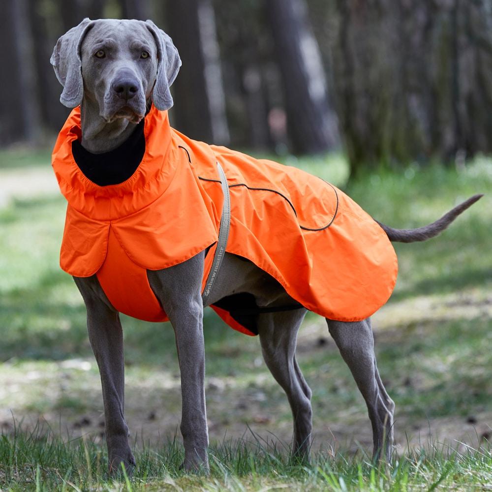 Hundedekken  Porsi Showmaster®