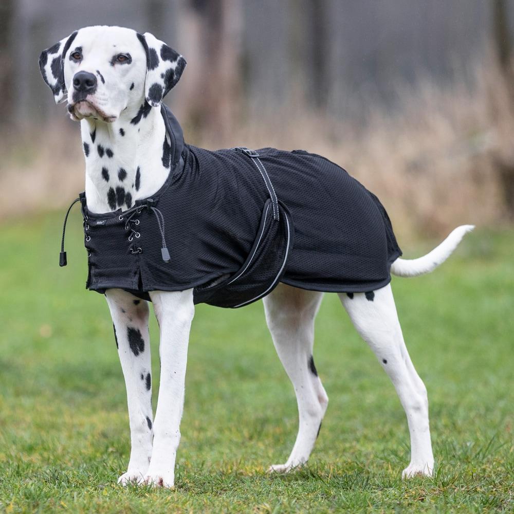 Nettingdekken Hund  Back on Track®