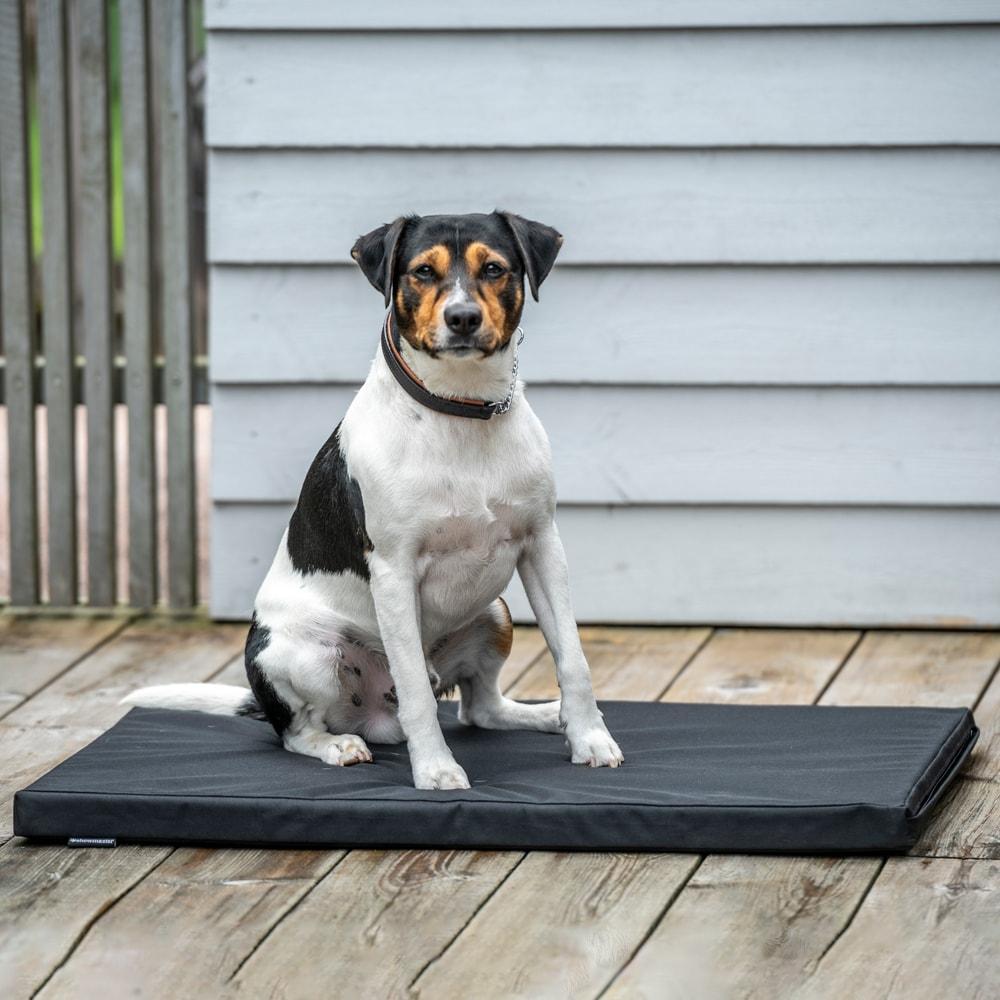 Hundemadrass   Showmaster®